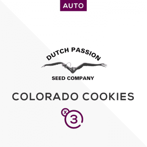 DUTCH PASSION – Auto colorado cookies