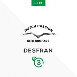 DUTCH PASSION – Desfran
