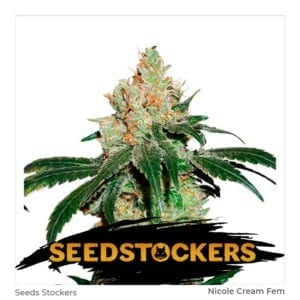 Seed Stockers – Nicole Cream Fem X3