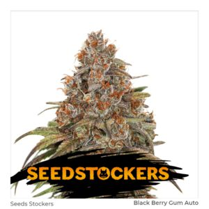 Seed Stockers – Blackberry Gum
