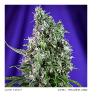 SWEET SEEDS – Sweet Trainwreck Auto