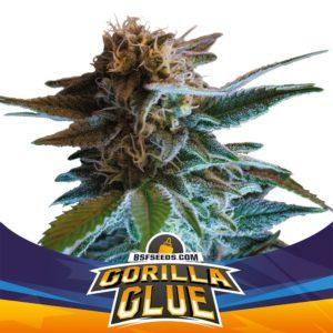 BSF – Gorilla Glue Auto